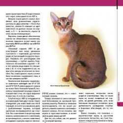 For Novice Abyssinianbreeders