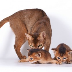 Basic concepts of ethology young kittens